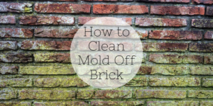 How to Clean Mold Off Brick